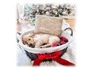Souhaits de Noël